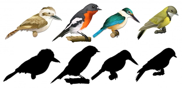 Silhouette, color and outline version of birds Premium Vector