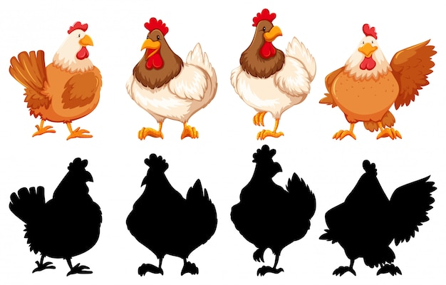 Silhouette, color and outline version of chickens Free Vector
