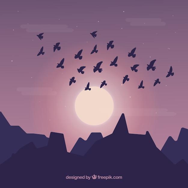 Silhouette flying bird background
