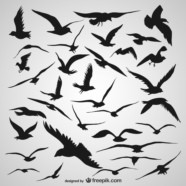 Silhouette flying birds Free Vector