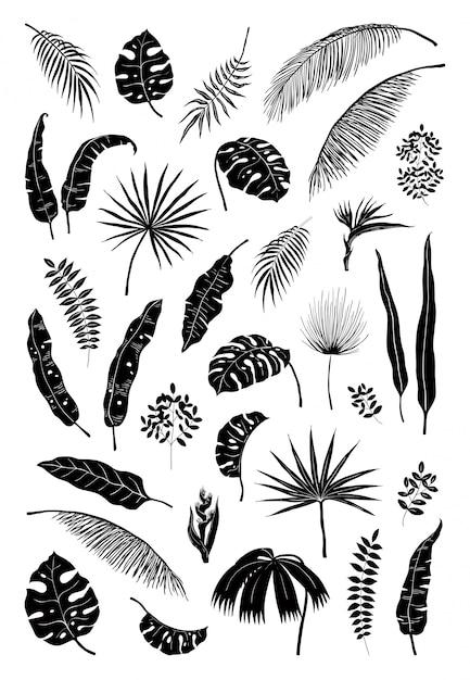 ヤシの葉をシルエットします。黒のジャングルの植物、夏の葉は、エキゾチックな花の枝を分離しました。モンステラ植物シルエットセット Premiumベクター