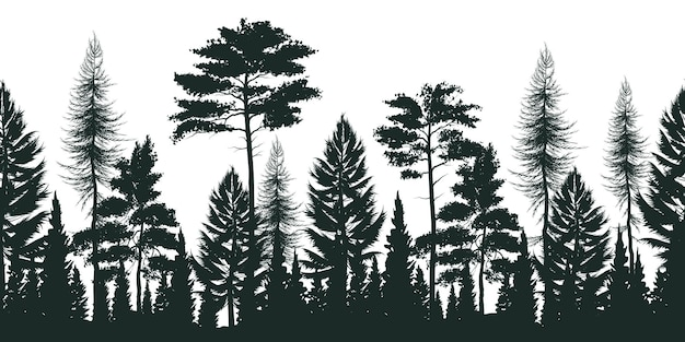 Silhouette of pine forest with small and tall evergreen trees on white Free Vector