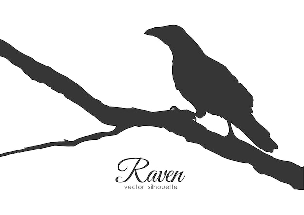 Silhouette of raven sitting on a dry branch. Premium Vector