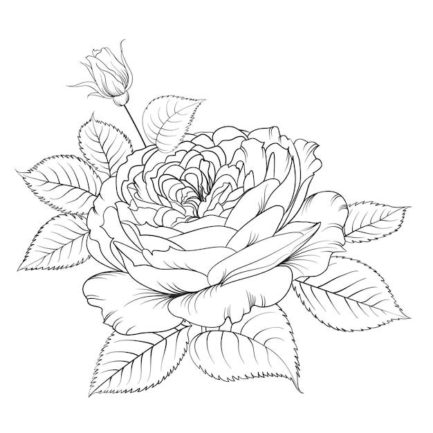 Siluetta della rosa isolata sopra bianco. Vettore gratuito
