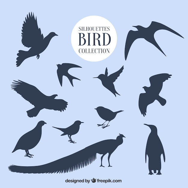 Silhouettes bird collection Free Vector