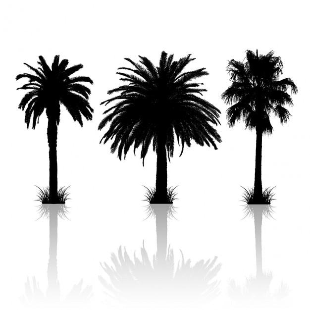 silhouette date palm tree - photo #4