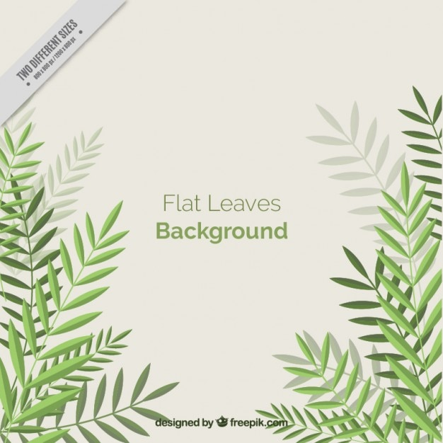 Simple background with flat palm leaves Free Vector