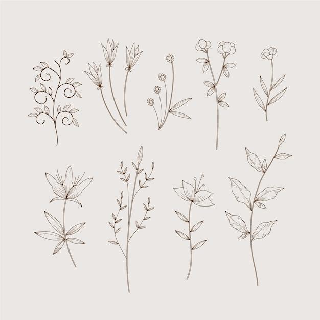 단순한 식물원 허브와 빈티지 스타일의 야생 꽃 무료 벡터