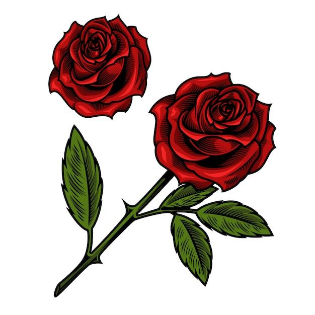 単一の美しい赤いバラ 無料ベクター
