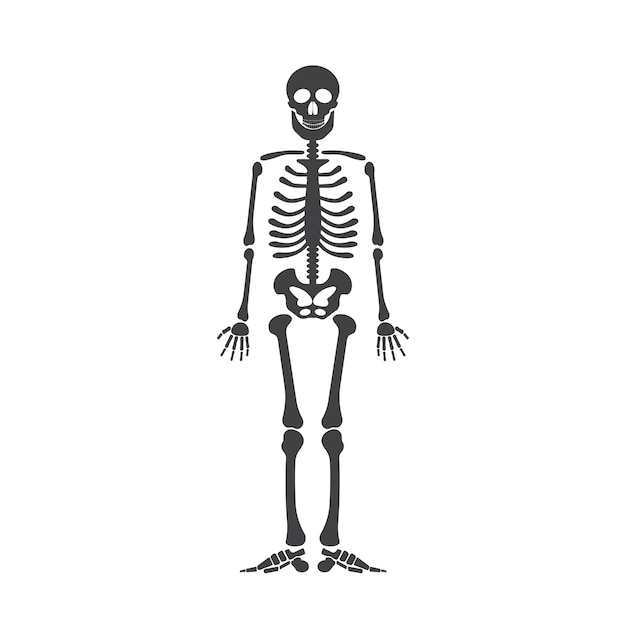 Skeleton Human Anatomy Vector Halloween Black Skeleton Isolated On