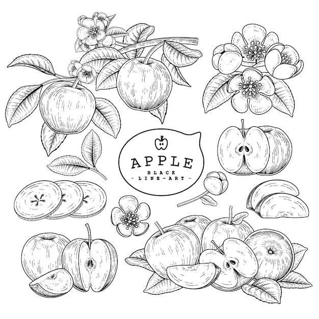 Эскиз яблочный декоративный набор. рисованной ботанические иллюстрации. черный и белый с линией искусством, изолированные на белом фоне. фруктовые рисунки. элементы в стиле ретро. Premium векторы