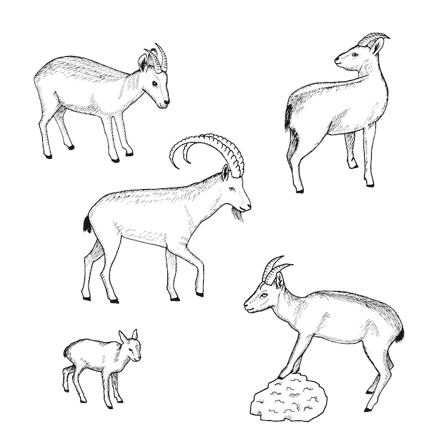 스케치 농장 동물 컬렉션 무료 벡터
