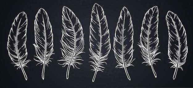黒板に羽をスケッチします。 Premiumベクター