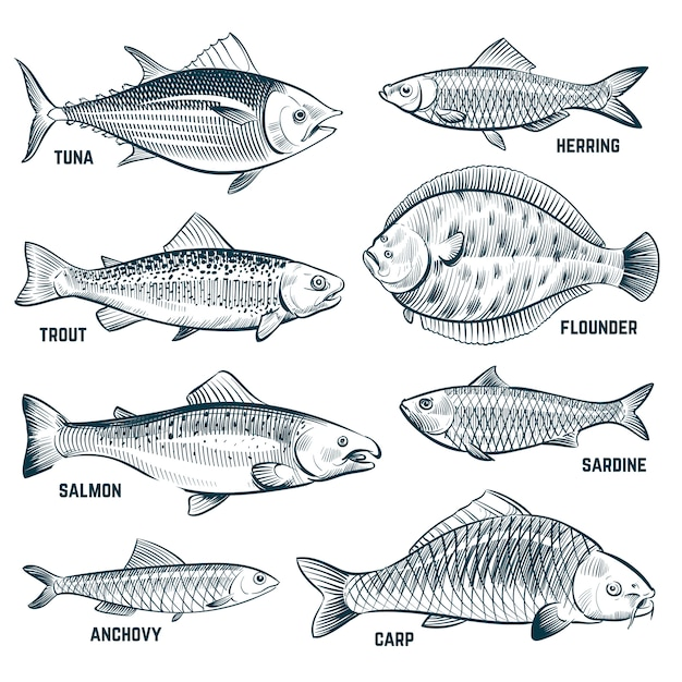 Sketch fishes. trout and carp, tuna and herring, flounder and anchovy. Premium Vector