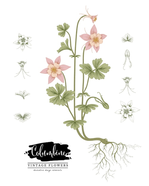 Sketch floral botany collection Premium Vector