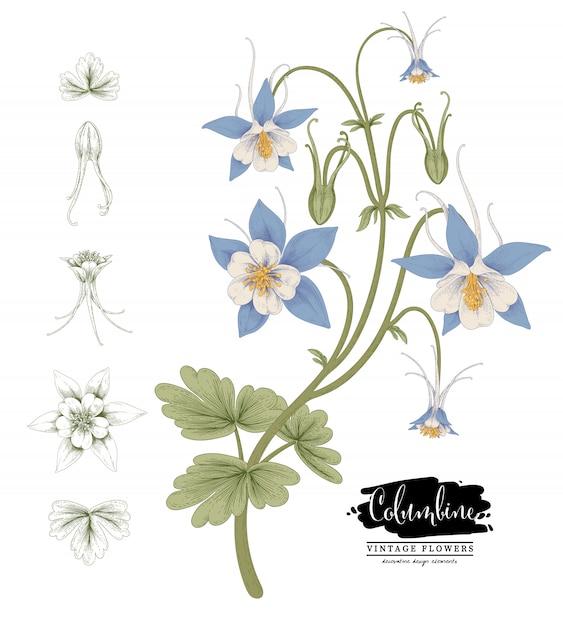 Sketch floral botany collection Premium Vector