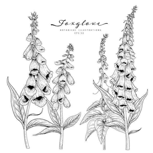 Эскиз цветочный декоративный набор. фоксглав цветочные рисунки. черный и белый с линией искусства изолированы. рисованной ботанические иллюстрации. Premium векторы