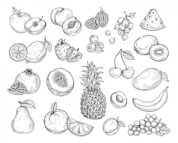 Эскиз фруктов. клубничная дыня, персик, манго. Premium векторы