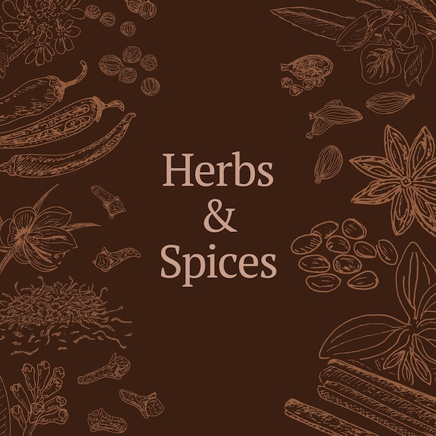Эскиз шаблона трав и специй с корицей, кориандром, кардамоном, перцем чили, шафраном, звездчатым анисом, гвоздикой мака Бесплатные векторы