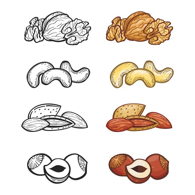 Sketch nut set. illustration of group of nuts Premium Vector