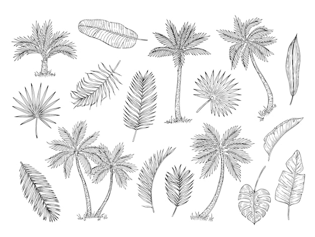 Premium Vector Sketch Palm Tree Tropical Rain Forest Trees And Exotic Palm Leaves Vintage Hand Drawing Vector Isolated Set
