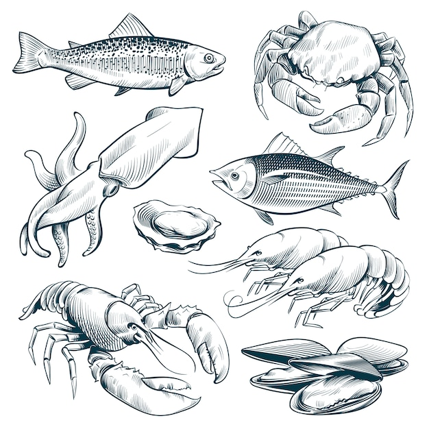 Sketch seafood. lobster shellfish fish shrimp. hand drawn seafoods meal vintage vector set isolated Premium Vector