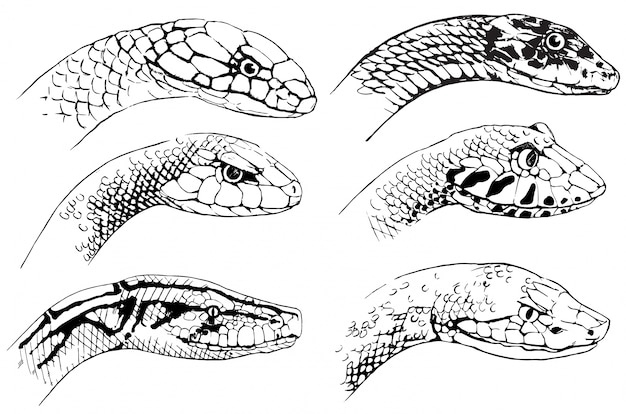Sketch of snakes Free Vector