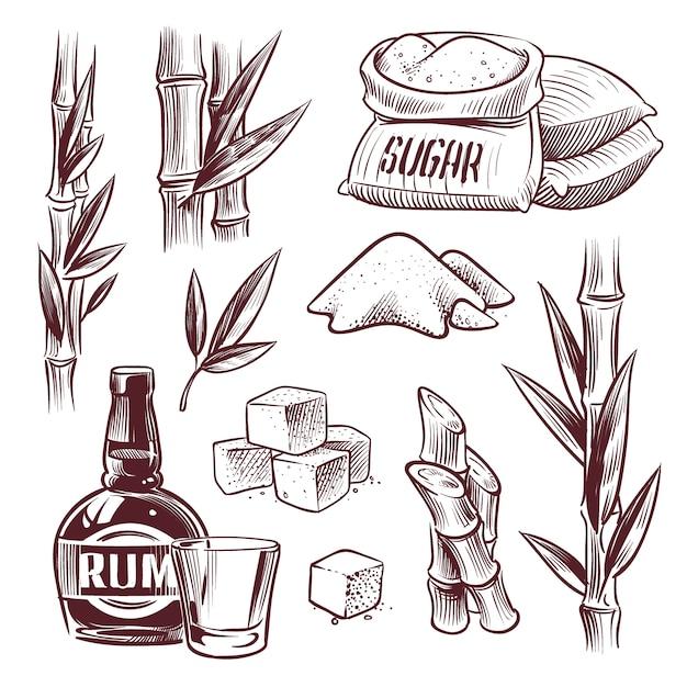 Эскиз сахарного тростника. сахарный тростник, сладкие листья, стебли сахарного растения, ром пьют стакан и бутылку. производство сахара рисованной Premium векторы