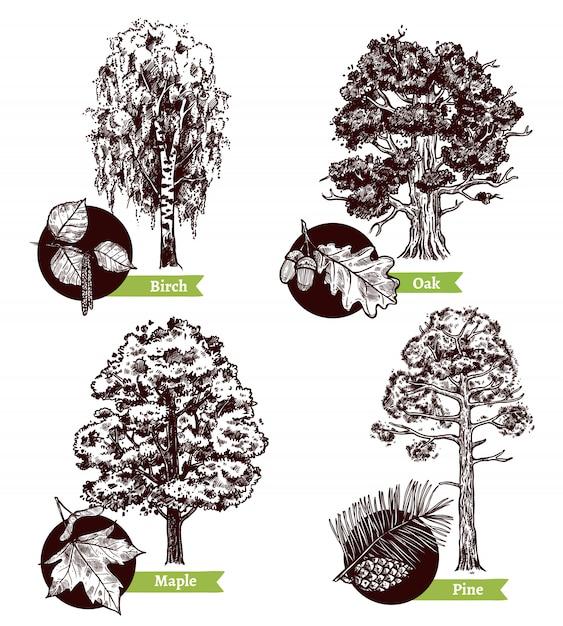 Концепция дизайна листьев дерева эскиза Бесплатные векторы