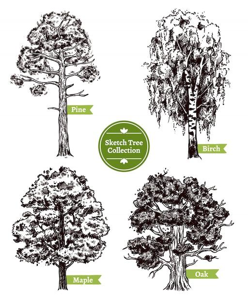 Sketch tree set Free Vector