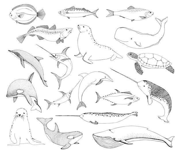 さまざまな海の生き物をスケッチします。カメクジラセイウチ、イルカなど。 Premiumベクター