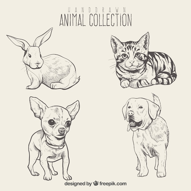 Sketches of beautiful animals set Free Vector