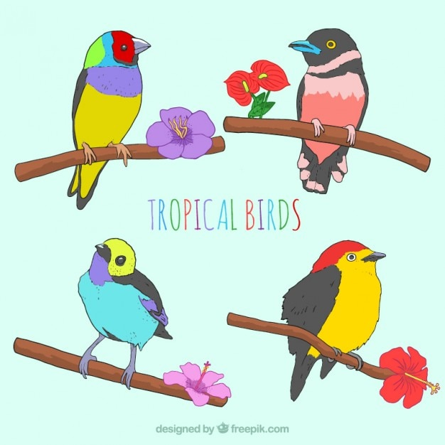 Sketches colorful tropical birds with\ flowers
