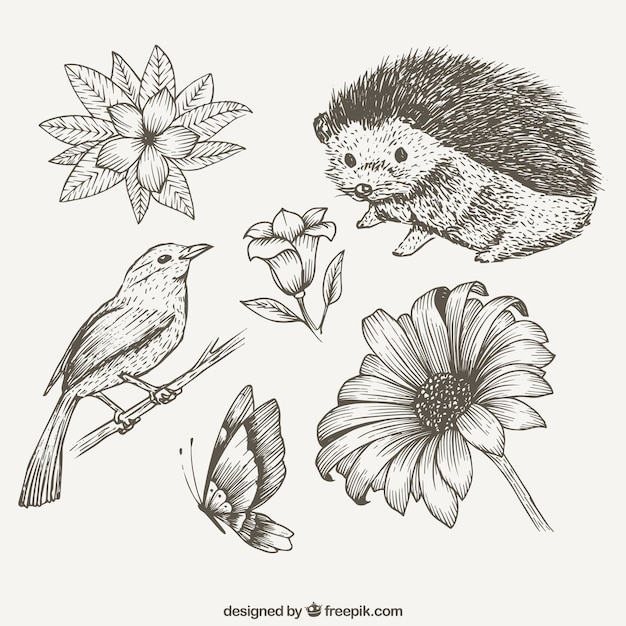 Sketches cute animals and flowers Vector | Free Download