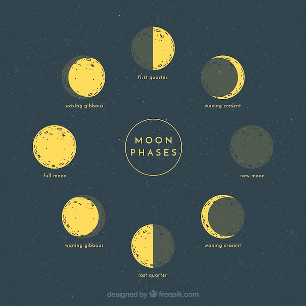 Sketches of lunar phases Free Vector