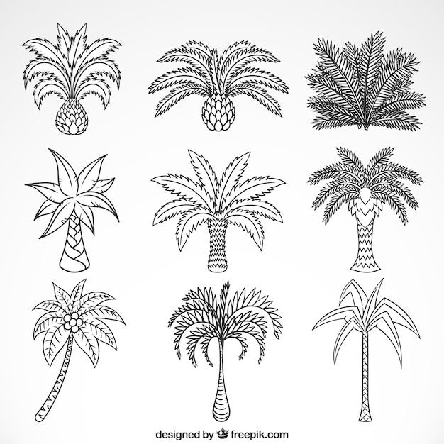 Sketches of palm trees collection  Free Vector