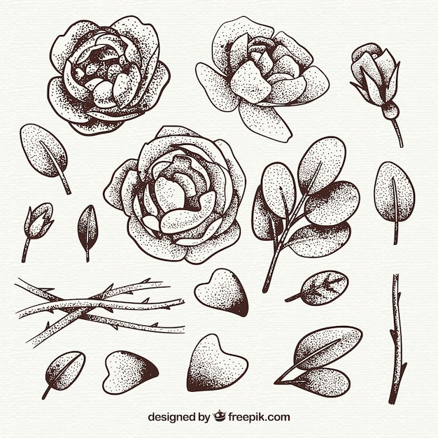Sketches of roses and leaves pack