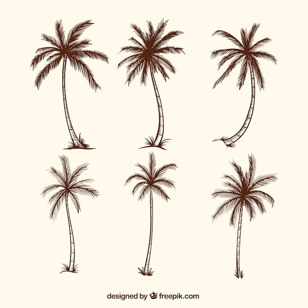 Sketches of palm trees Premium Vector