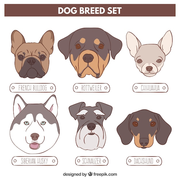 Sketches variety of dogs Free Vector