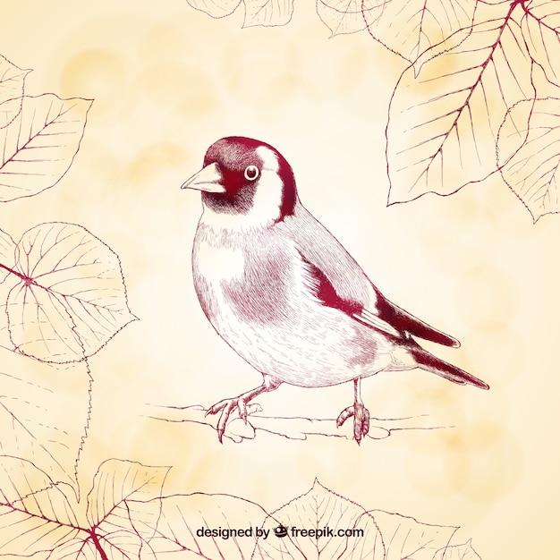 Sketchy bird Free Vector