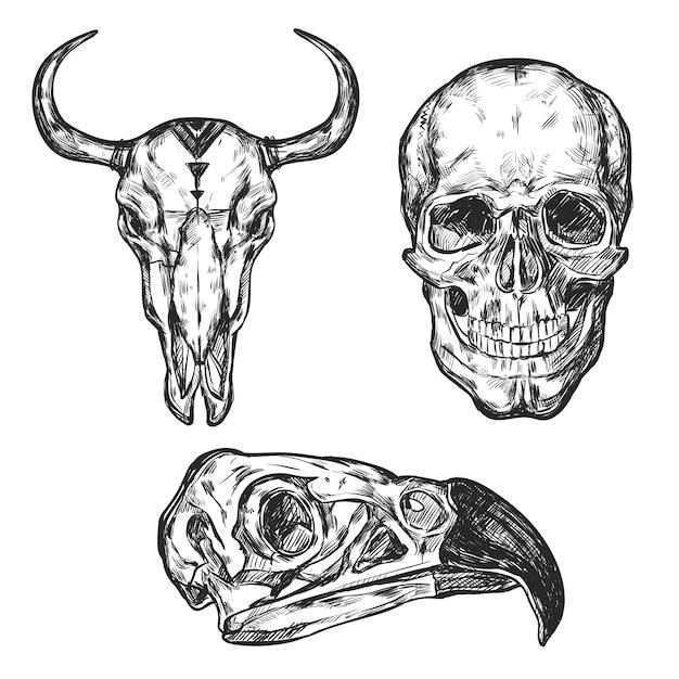 Набор иллюстраций черепа Бесплатные векторы