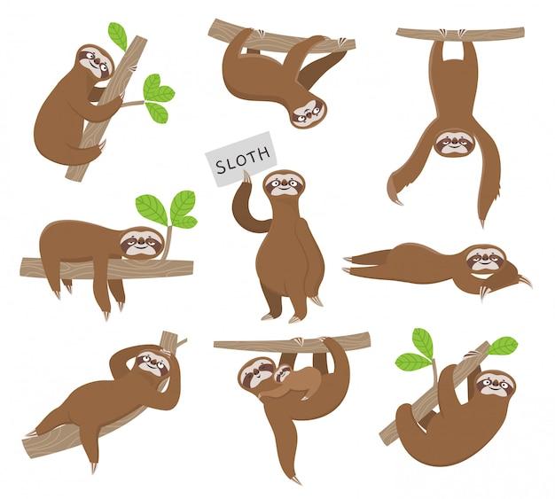 Лень. симпатичные детские животные ленивцы висят на ветке дерева тропических лесов. смешные персонажи Premium векторы