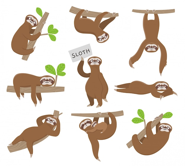 Sloth. cute baby animal sloths hanging on tree branch of rainforest. funny characters Premium Vector