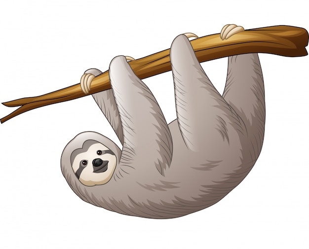 Sloth hanging on a branch Premium Vector