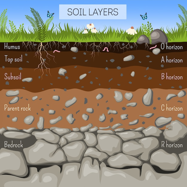 Soil Layers Diagram With Grass  Earth Texture  Stones  Plant Roots  Underground Species  Vector