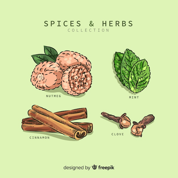 Spices and herbs collection Free Vector