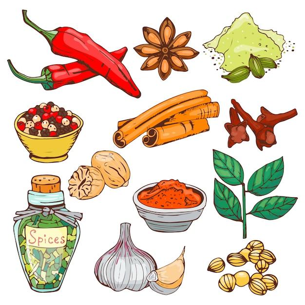 Специи приправляя нарисованные рукой элементы трав стиля еды стиля и бутоны цветка кухни ингридиента семян выходят еду засаживают здоровый органический овощ. Premium векторы