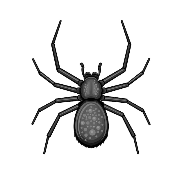 Spider black arachnid on white background. Premium Vector