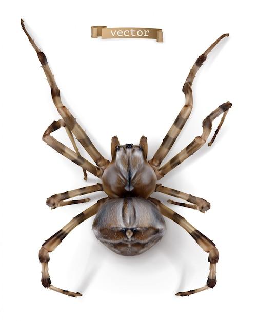 거미, 고품질 현실적인 벡터 프리미엄 벡터