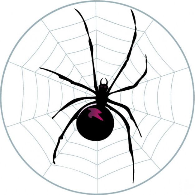 Spider on circular web Vector | Free Download